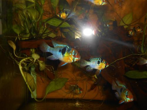 ryby květen 086.JPG