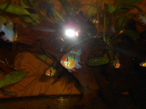 ryby květen 087.JPG