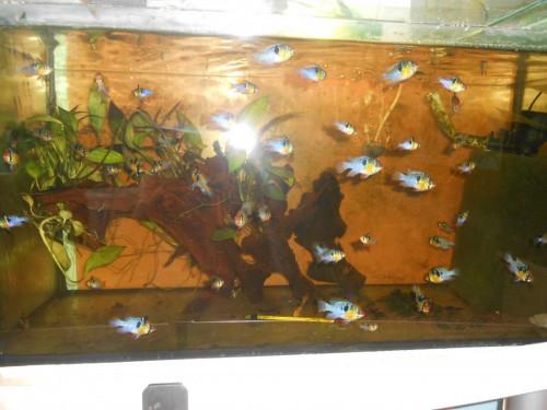 ryby květen 027.JPG