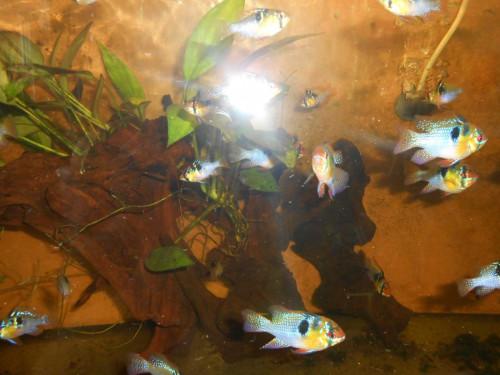 ryby květen 031.JPG