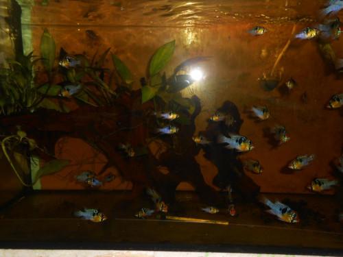 ryby květen 092.JPG
