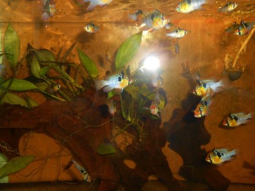 ryby květen 084.JPG